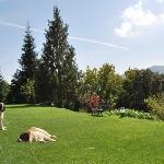 Sant Bernat's Dogs