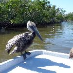 Totch's Everglades Island Airboat Tours Foto