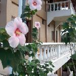 hibiscus and balconies