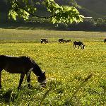 Noriker Pferdezuchtbetrieb