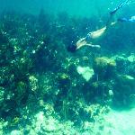 Reef near Guana Cay