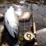 Fully guided fly fishing trips.