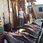 Varios tamaños de pescado PIRARUCU