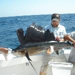 84 inch 70 lb trophy sailfish