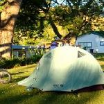 Large grassed tent sites