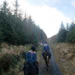 Through the forestry