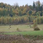 Czarne [Jelenia Góra] jesienią - Schwarzbach [Hirschberg] im Herbst