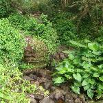 El Yunque plants