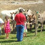 Rayba Acres Farm Donkeys & Minature Ponies