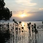 Susnet at the mangroves