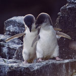penguins-so cute!