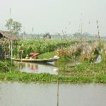 Floating Vegetable Farm Tour