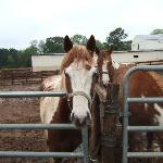 Some of the friendly horses