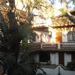 jacaranda tree in courtyard