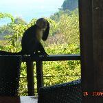 Monkeys were regular visitors to the balcony