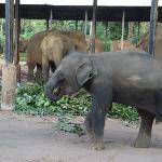 象の赤ちゃん