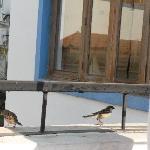 Birds on our balcony