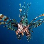 Plongée et chasse sous marine