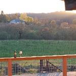 The Pinot Vineyard