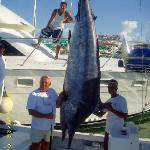 This Big Black Marlin was caught on Bella del Mar 1