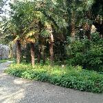 orto botanico 3
