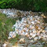 Piles of Conch