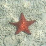 starfish everywhere