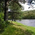 Anagach Woods