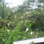 The white birds-lovely