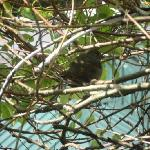Birdie on my patio shrub-cutie