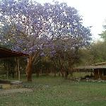 The Lovely Lavendar flower tree with Deer grazing in the background..