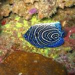 Photo de Odyssea Dive