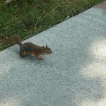 Un des nombreux écureuils