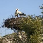 Our resident Storks (Mar-Aug)