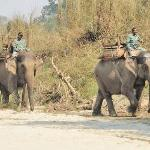 Elephants for our safari