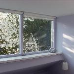 Beautiful magnolia tree outside