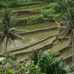 Sayan Rice Terraces