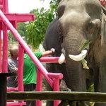 Elephant being treated by volunteers