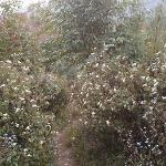 trek through the flowers