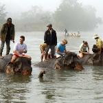 Bathing the elephants in the Nam Khan