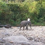 Taking elephant for a walk Klong Prao