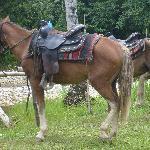 The beautiful horse I rode