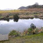 the wee pond
