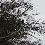 Eagle above beach