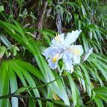 Orquidea selvagem