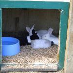 barn yard bunny hutch