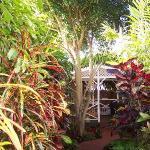 Bamboo Jungle House Foto