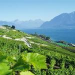 Vignoble de Lavaux
