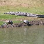 They're serious about the crocodiles! This is just down the road from BVG at the golf course!