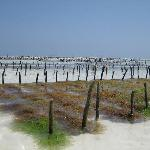 seaweed plantation nearby